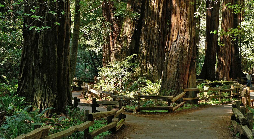 Muir Woods in the San Francisco Bay Area